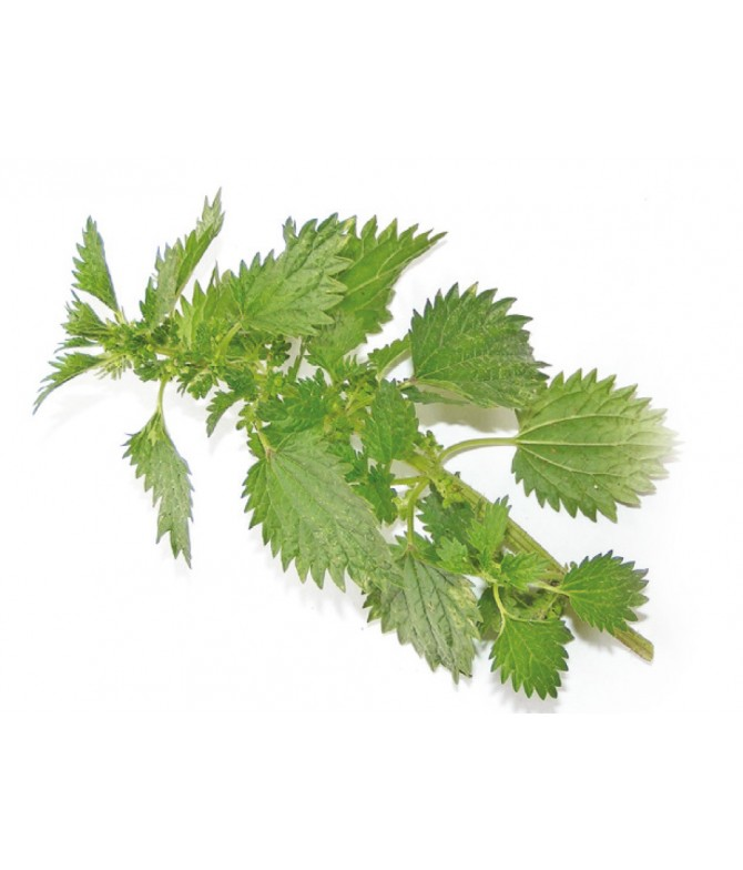 Comb Weed