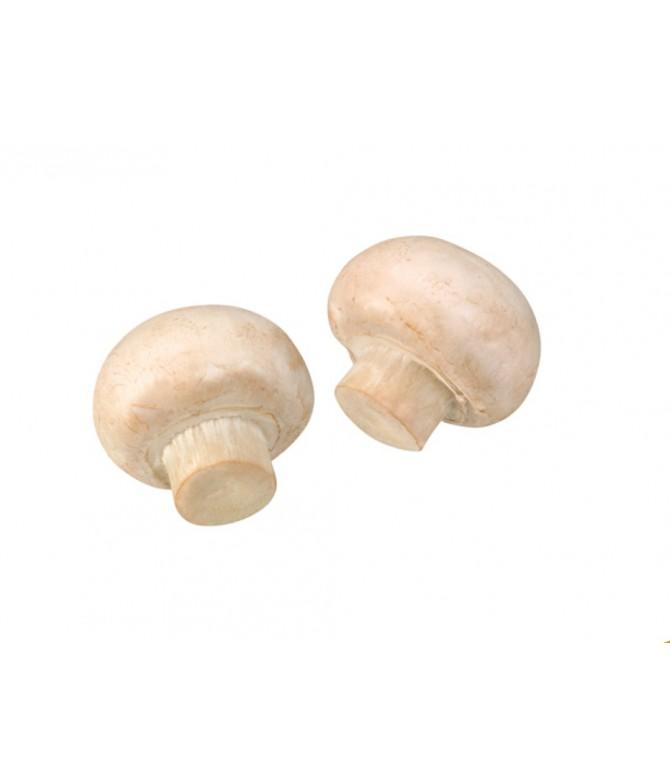 Fungal Culture