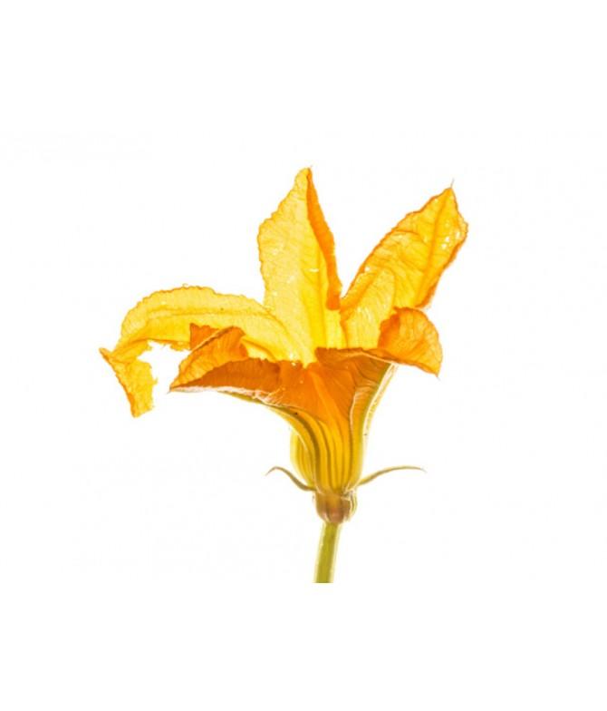 Kabak Çiçek