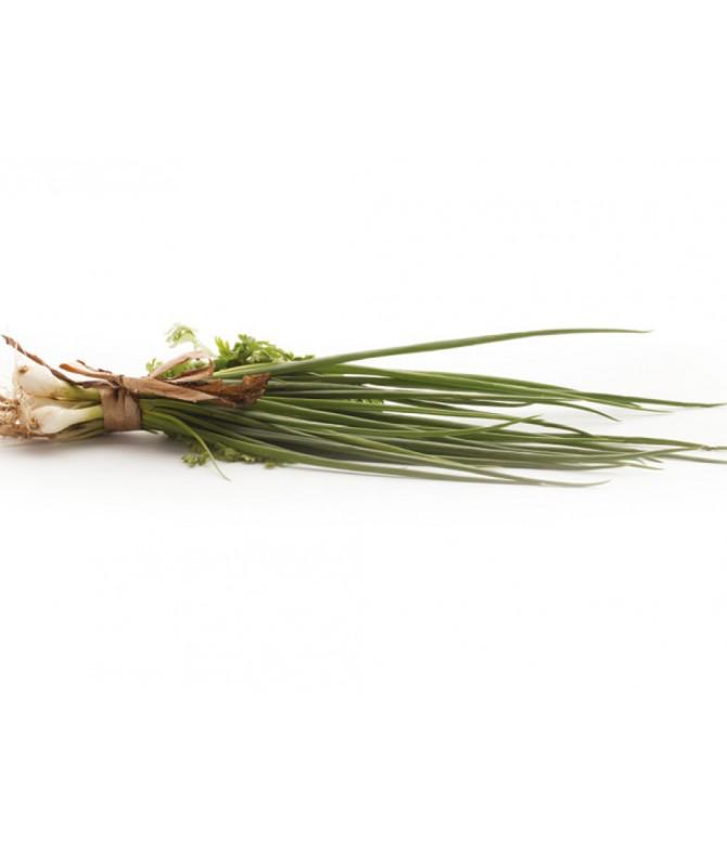 Coriander Sprouts