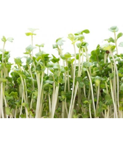 Brokoli Filizi