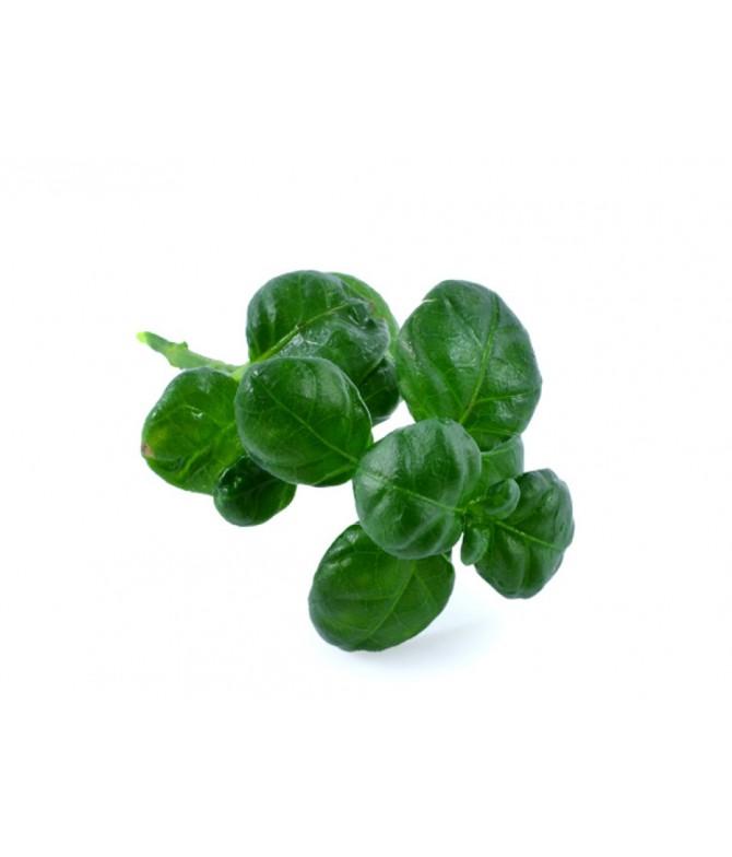 Semiz Salat